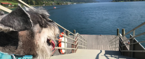 traveling with pet kiwi.com